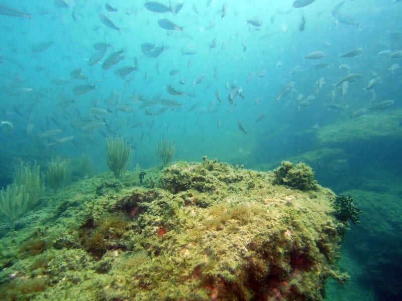 Baptême de Plongée au Cap d'Agde