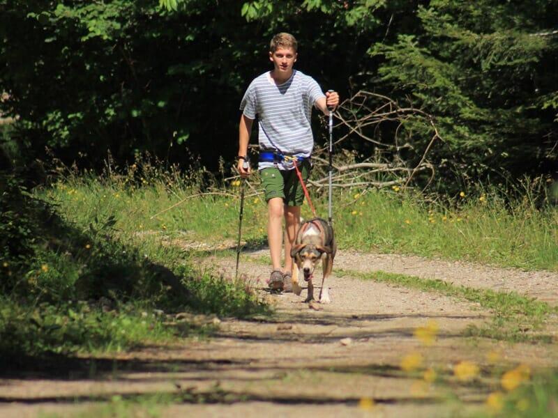 Cani-Rando en Auvergne près de Aurillac