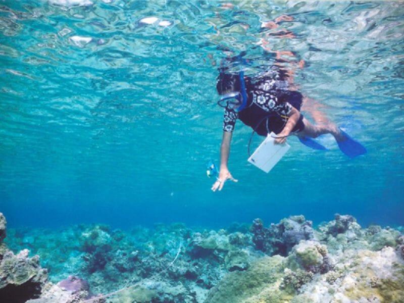 Randonnée Palmée Snorkeling à Calvi en Corse