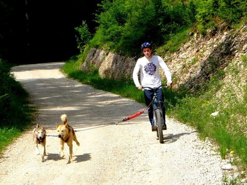Randonnée en trottinette attelée dans le parc naturel du Haut Jura
