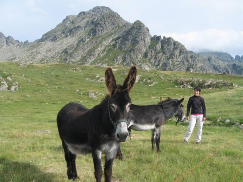 Randonnée avec les ânes près d'Argeles - Gazost - Massif du Hautacam