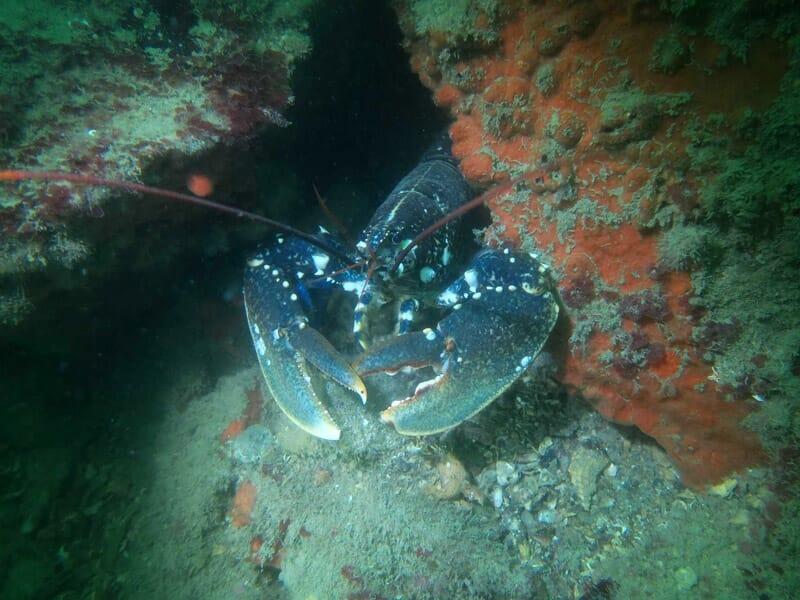 Randonnée Palmée à Quiberon - Snorkeling en Bretagne
